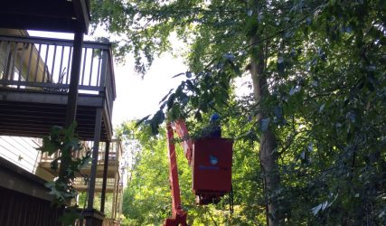Tree pruning with a crane next to apartment balconies