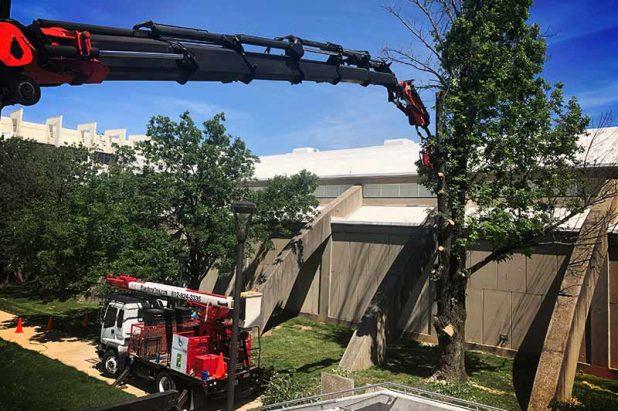 Risk Management, Pruning & Removals
