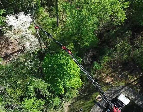 Delicate Ash Tree Removal