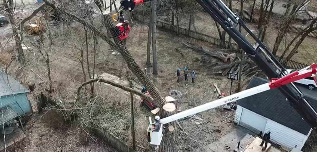 tree service company removing large cottonwood tree from a backyard