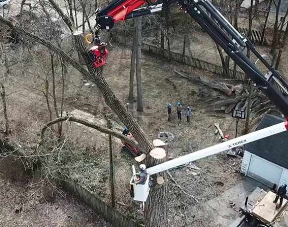 120 Foot Cottonwood Removal - 1.75 Hours