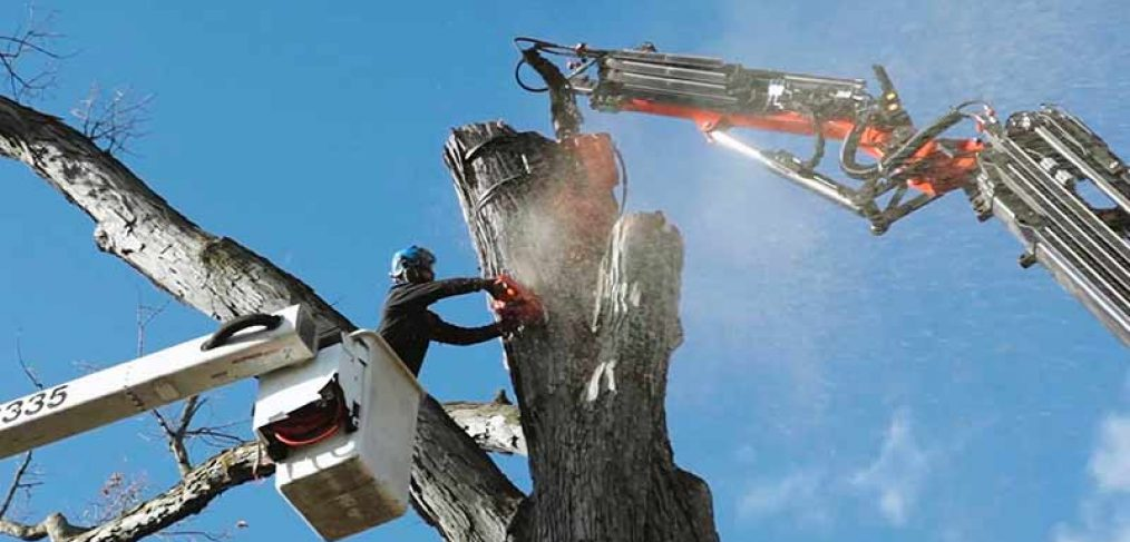bucket lift with arborist chainsawing and grapple crane holding tree