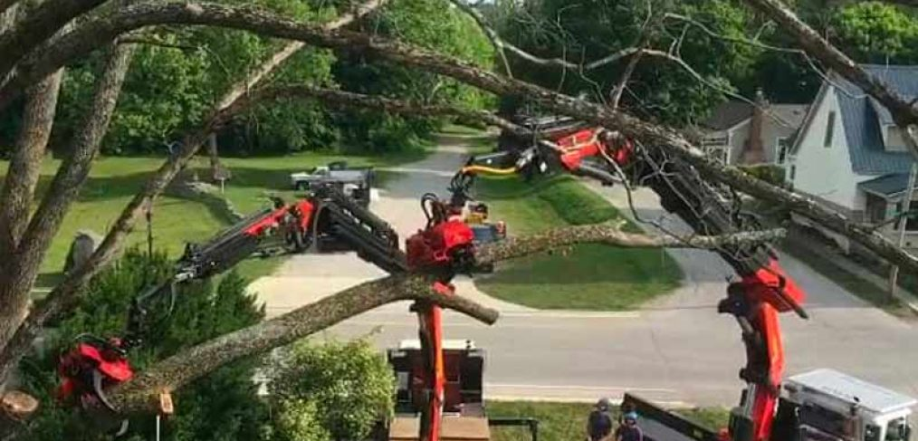 2 tree removal trucks working with neighborhood street and yard in the background