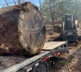 tree trunk section for wood milling