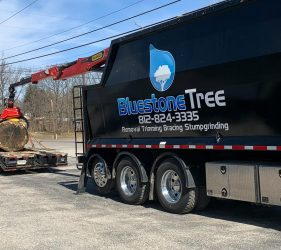 Bluestone Tree loading tree trunk section