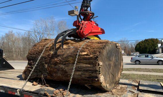 oak tree trunk section for lumber mill & wood slabs