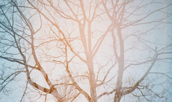 tree branches against blue sky double exposure