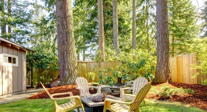 trees with mulch in backyard with small firepit