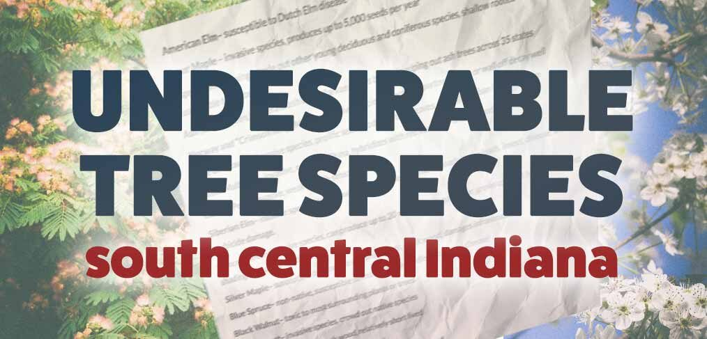 undesireable tree species graphic