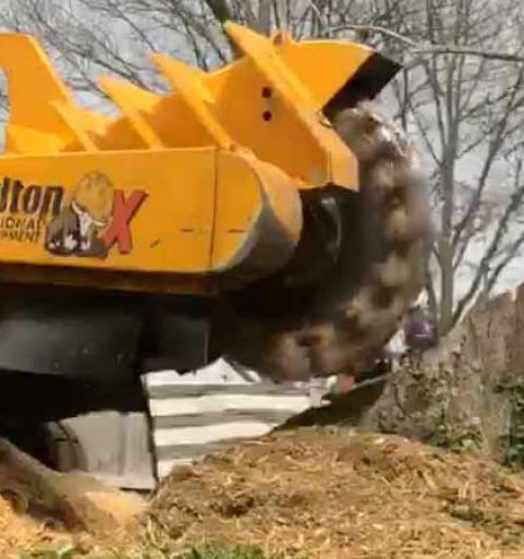 Stump Grinding Timelapse [video]
