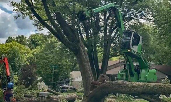 Tree Removal Using Sennebogen 718 [video]
