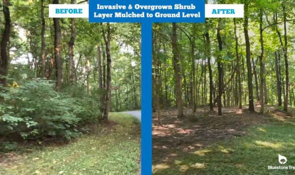 Before & After Video Forestry Mulching Long Driveway [video]