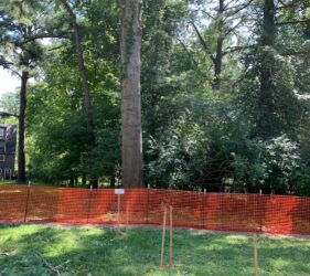tree protection zone fencing around trees on a build site