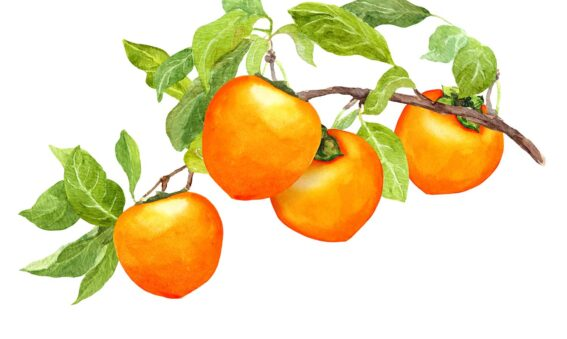 painting of persimmon fruit on stem