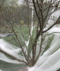 Insect netting cicada protection