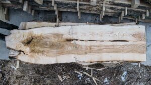 Ash Wood Slab AH-01-04