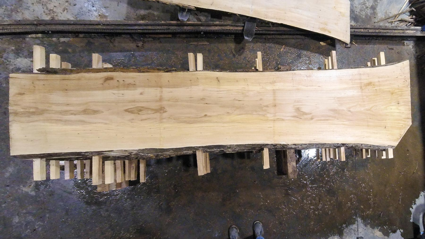 Ash wood slab AH-06-6