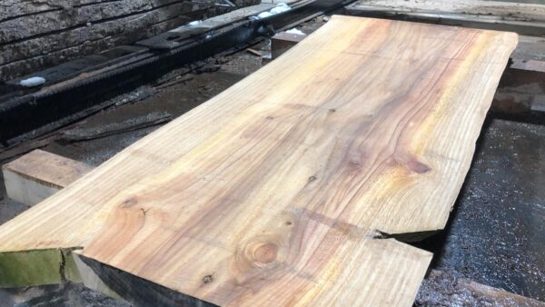 Bald Cypress wood slab BC-01-1b