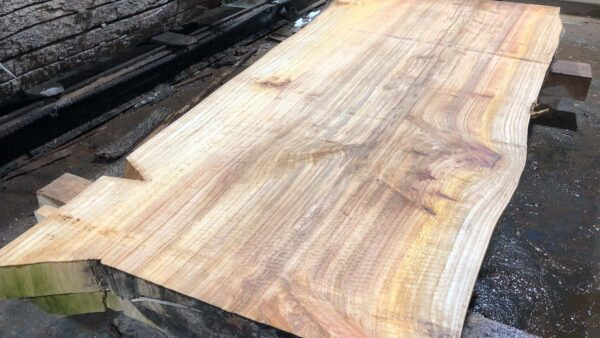 Bald Cypress wood slab BC-01-2b