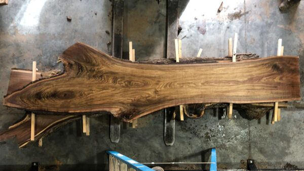 Black Walnut wood slab WN-03-01