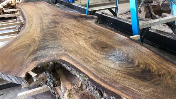 Black Walnut wood slab WN-03-01b
