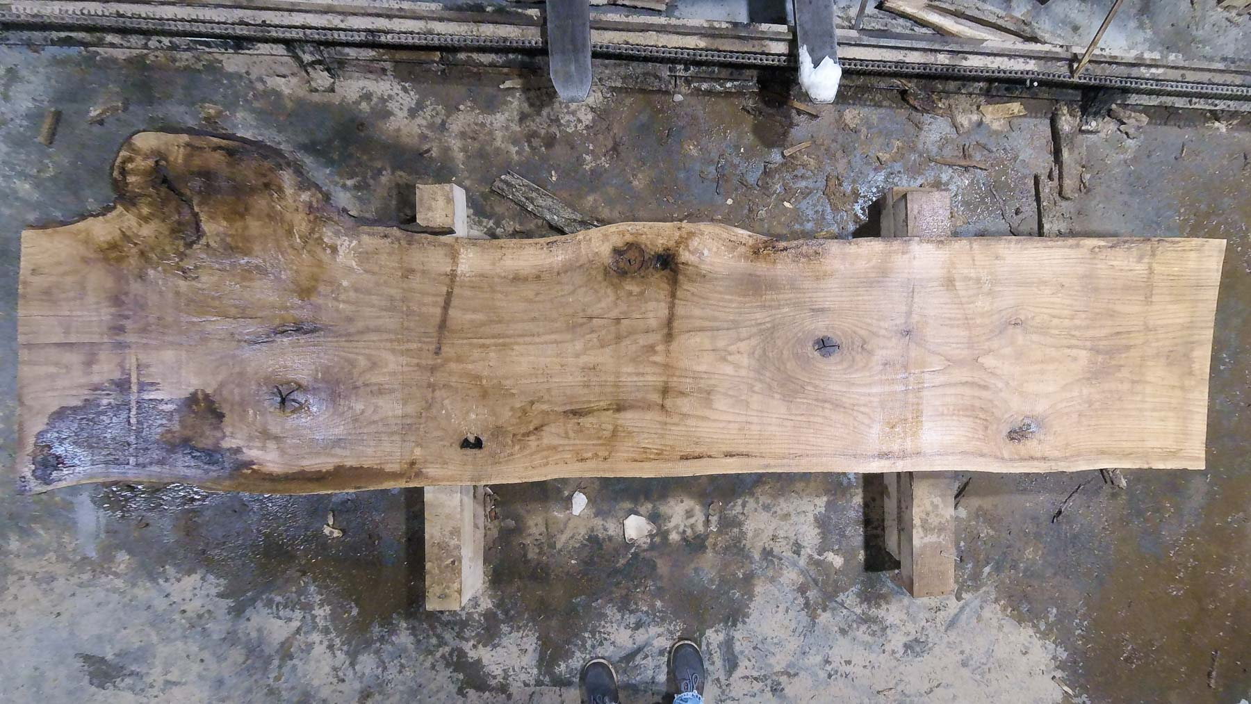 Red Oak wood slab RO-04-1