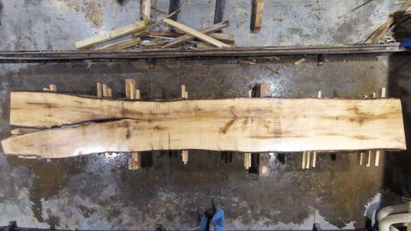 Silver Maple wood slab VM-01-4