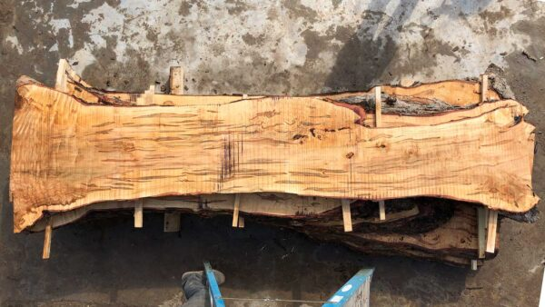 Silver Maple wood slab VM-02-05