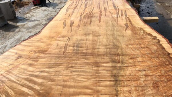 Silver Maple wood slab VM-02-05b