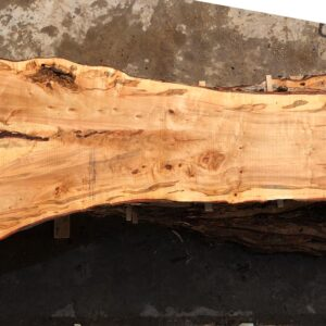 Silver Maple wood slab VM-02-06
