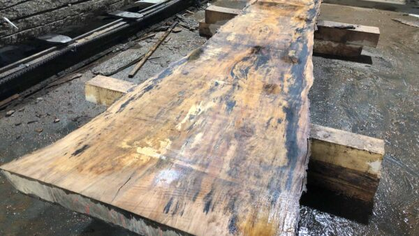 Sycamore wood slab SY-01-1b