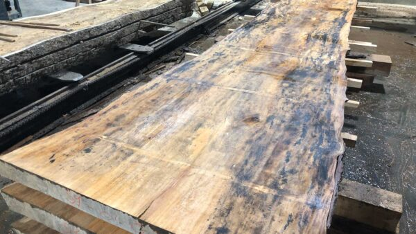 Sycamore wood slab SY-01-3b