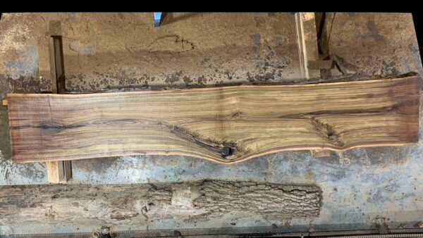 Black Walnut wood slab 04-04