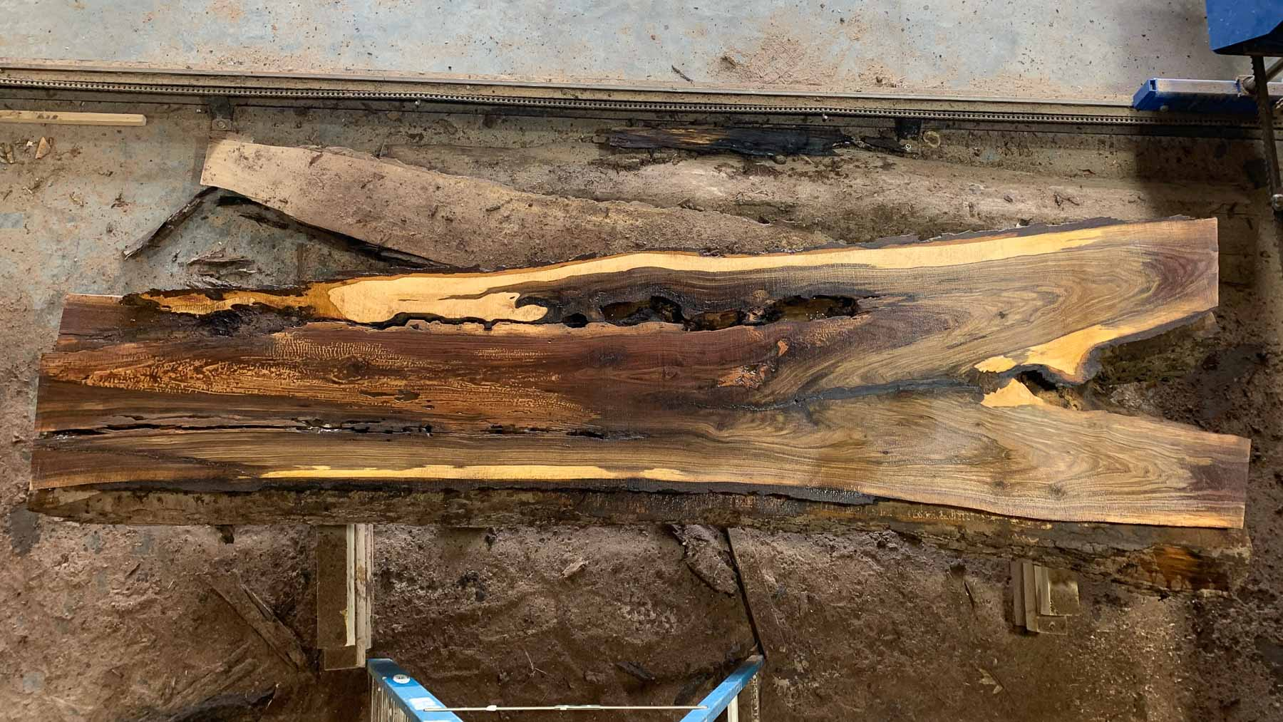 Black Walnut wood slab 05-03