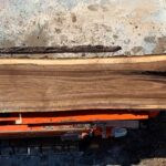 Black Walnut wood slab 06-02