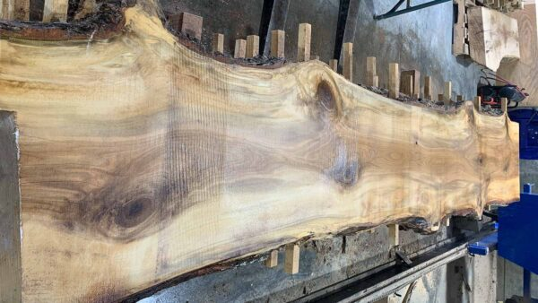Sweetgum wood slab SG-03-06c