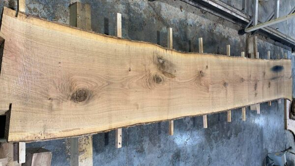 White Oak wood slab WO-02b