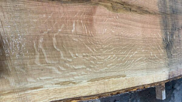 White Oak wood slab WO-04b