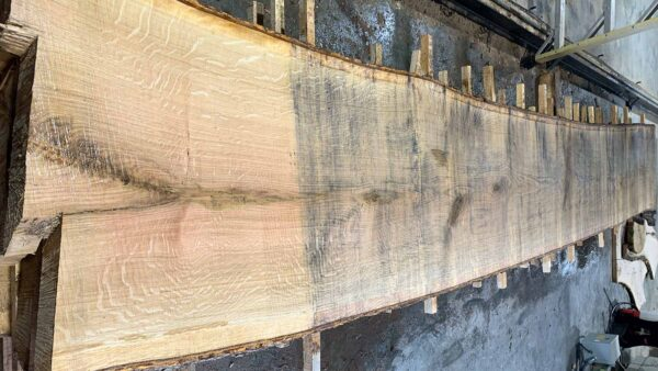 White Oak wood slab WO-04c