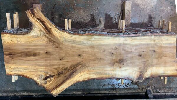 Sweetgum wood slab SG-04-04