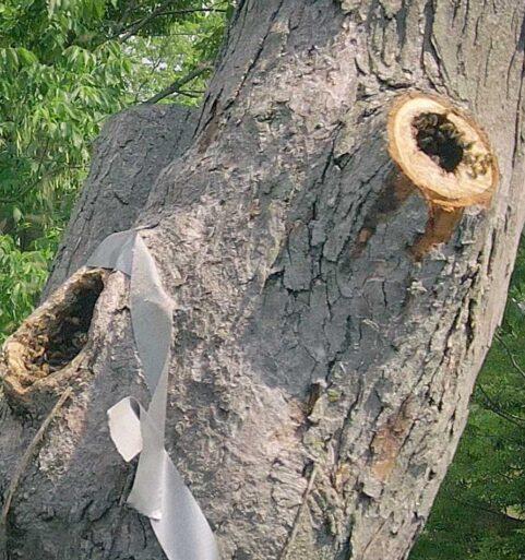 Honey Bee Colony Relocation [video]